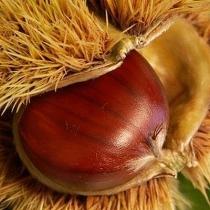 scala-chestnut-festival-comes-gigione-program-22790.ashx